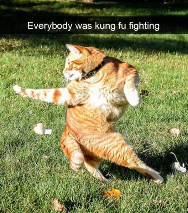 hilarious-cat-snapchats (47)