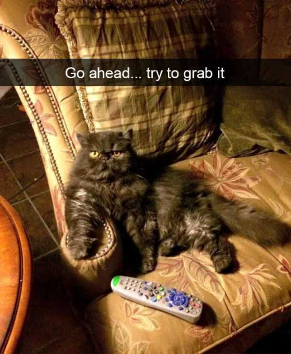 hilarious-cat-snapchats (48)