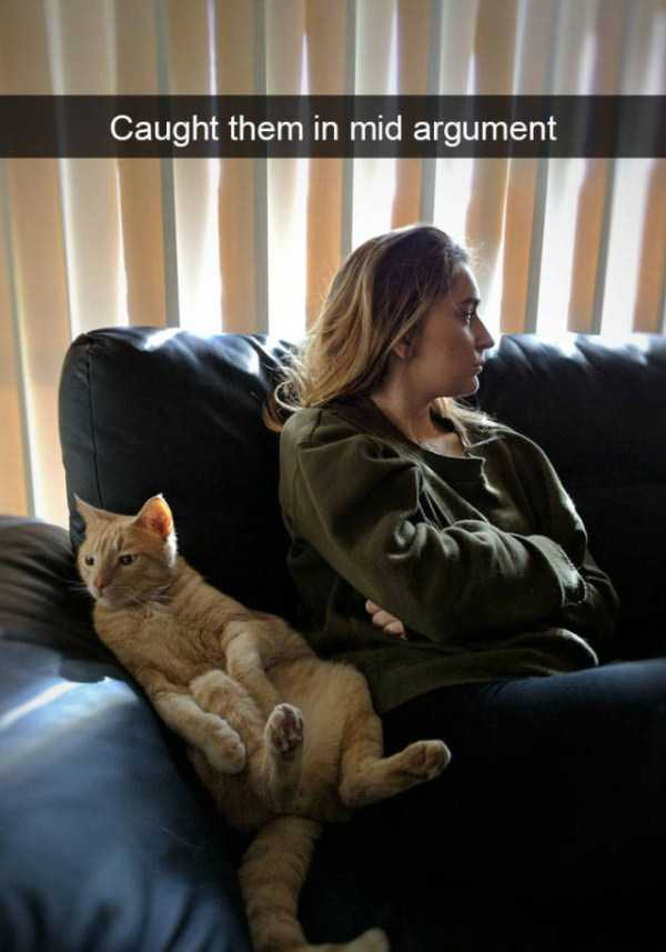 hilarious-cat-snapchats (5)