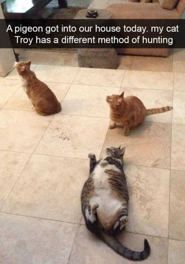 hilarious-cat-snapchats (50)
