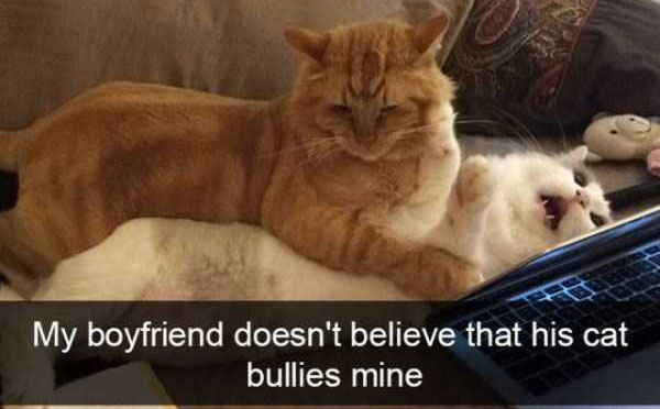 hilarious-cat-snapchats-(51)