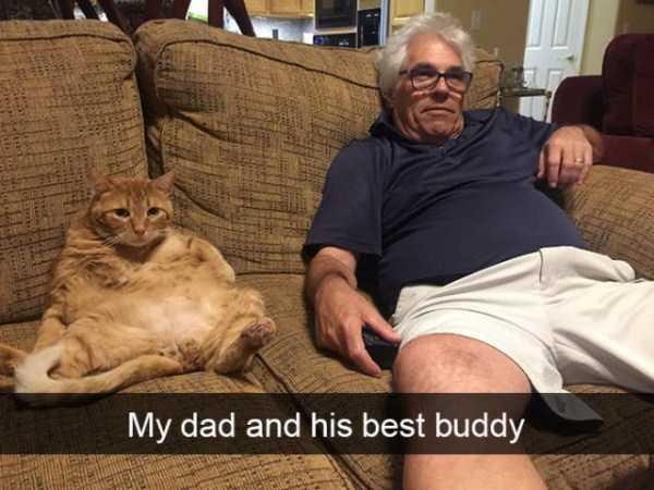 hilarious-cat-snapchats (6)