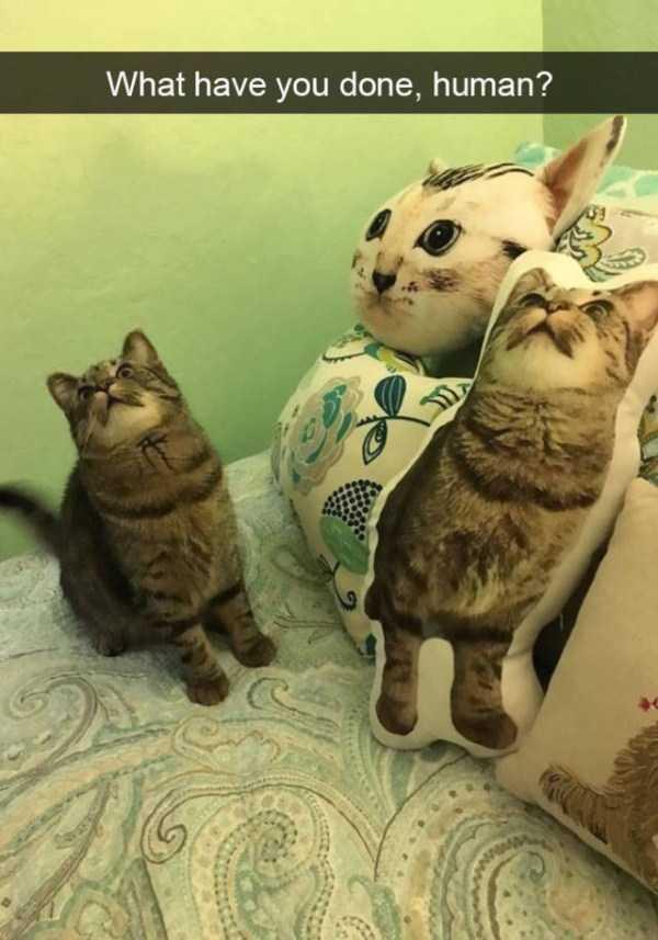 hilarious-cat-snapchats (8)