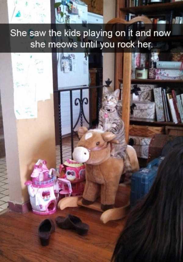 hilarious-cat-snapchats (9)