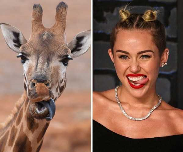 animal-doppelgangers (11)