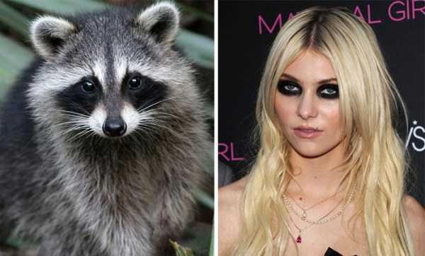 animal-doppelgangers (25)