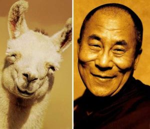 animal-doppelgangers (3)