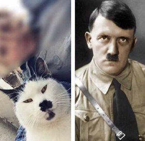 animal-doppelgangers (31)