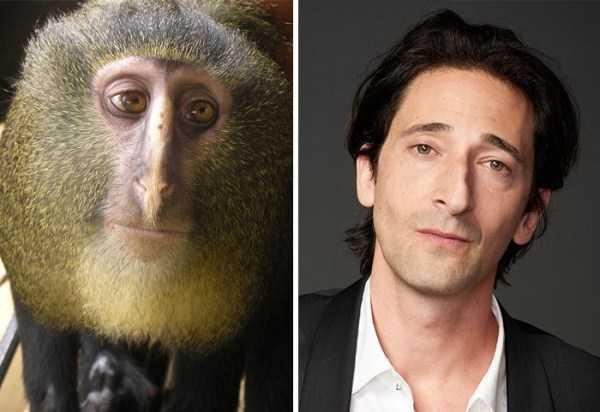 animal-doppelgangers (4)