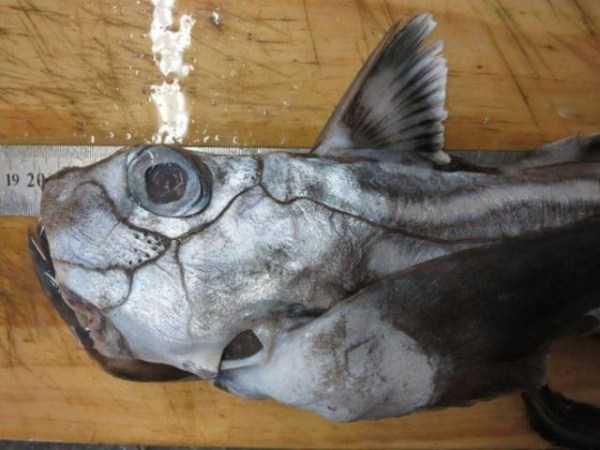 bizarre-scary-sea-creatures (12)