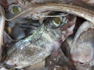 bizarre-scary-sea-creatures (13)
