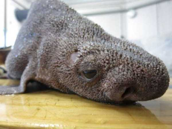 bizarre-scary-sea-creatures (9)