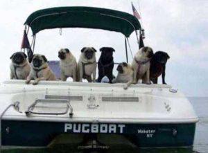 hilarious-boat-names (19)