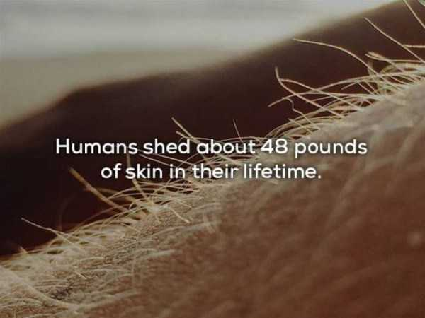 human-body-facts (15)