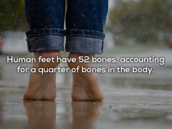 human-body-facts (16)