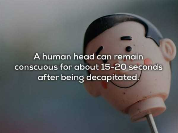 human-body-facts (17)