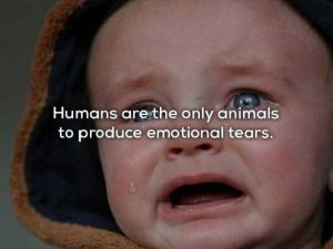 human-body-facts (6)