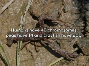 human-body-facts (9)