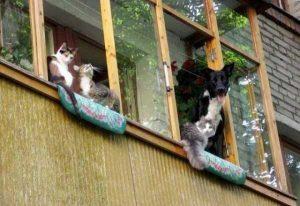 balconies-in-russia (21)
