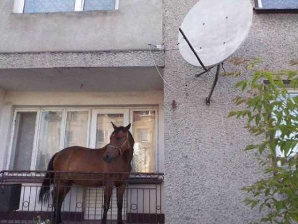 balconies-in-russia (28)