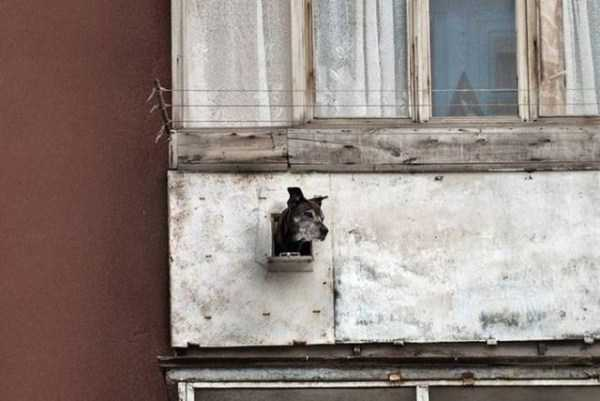 balconies-in-russia (9)