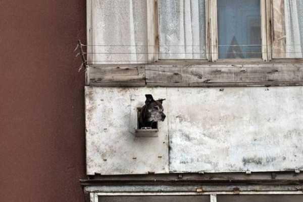 balconies-in-russia (9)