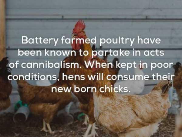 bizarre-weird-facts (1)