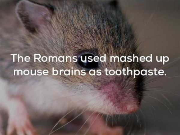 bizarre-weird-facts (4)