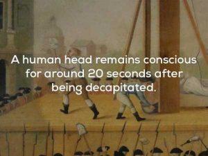bizarre-weird-facts (6)