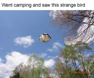 funny-camping-fails (4)