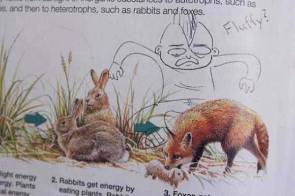 funny-textbook-drawings (33)