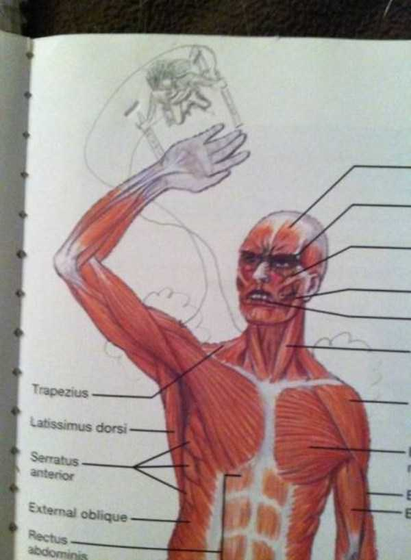 funny-textbook-drawings (6)