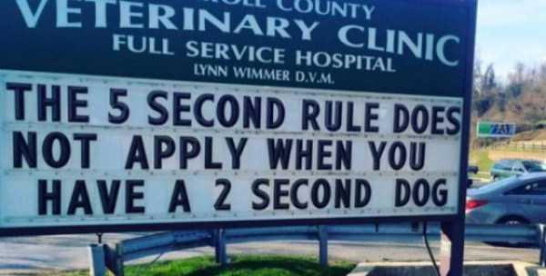 funny-vet-signs (2)