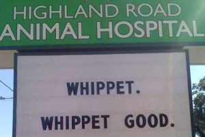 funny-vet-signs (7)