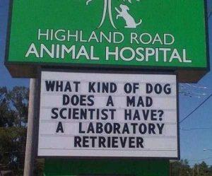 funny-vet-signs (9)
