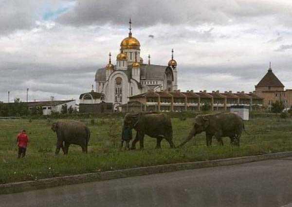 russia-wtf-pics (3)