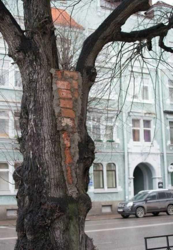 russia-wtf-pics (43)