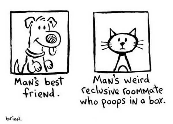 cats-dogs-differences (11)