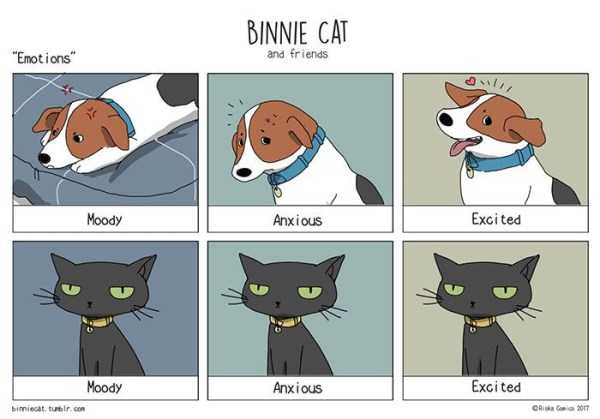 cats-dogs-differences (17)