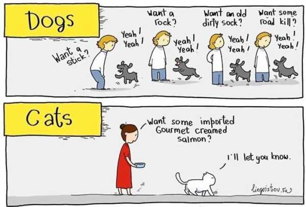 cats-dogs-differences (18)