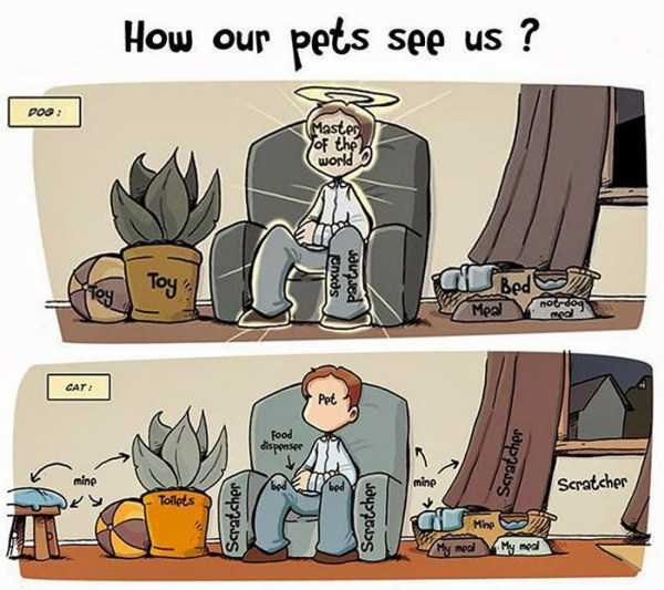 cats-dogs-differences (22)