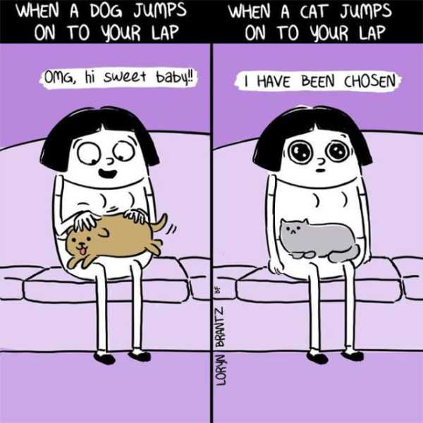 cats-dogs-differences (23)