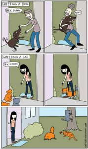 cats-dogs-differences (25)