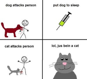 cats-dogs-differences (5)