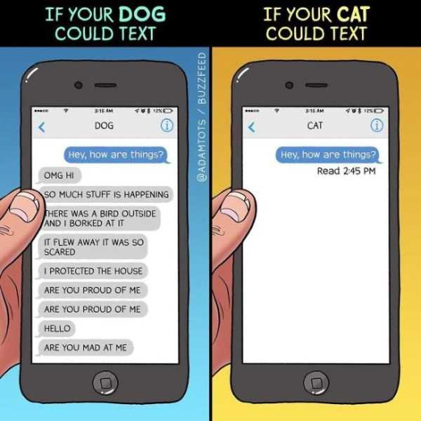 cats-dogs-differences (8)