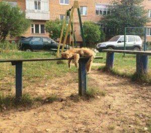 funny-animals (3)
