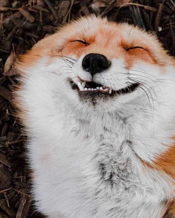 funny-animals (36)