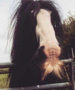 horses-moustaches (11)