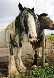 horses-moustaches (14)