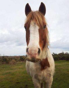 horses-moustaches (17)